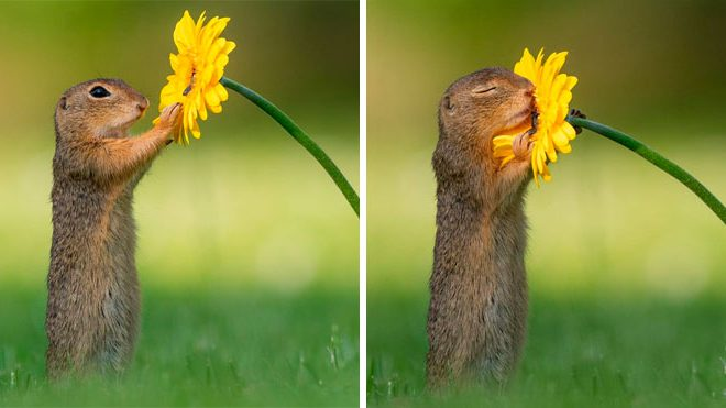 Photographer Captures The Precious Moments Of What Happens In Nature When No One's Around (20 Pics)