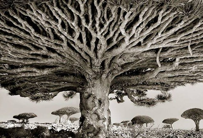 Woman Spends 14 Years Photographing World's Oldest Trees, And The Result Is Amazing